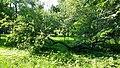 Berezhany Arboretum Park in Rai (7).jpg