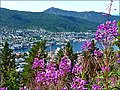 Bergens fjellstrekninger - panoramio.jpg