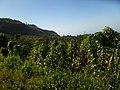 Berry, Marigot - panoramio.jpg