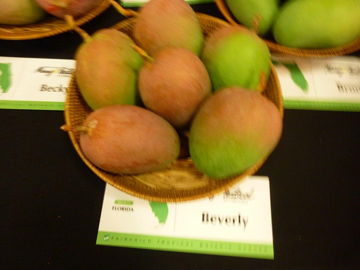 Beverly Mango Wikipedia