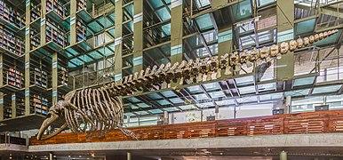 Biblioteca Vasconcelos, Ciudad de México, México, 2015-07-20, DD 19-20 HDR.JPG