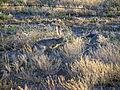 Big Bend National Park PB102552.jpg