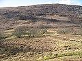 Birchwoods beneath Druim na h-Earba - geograph.org.uk - 914738.jpg