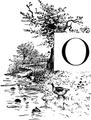 Bird-Lore-1-2 0053-O.png