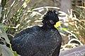 Bird in San Juan de Argón Zoo 5.jpg