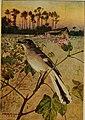 Bird lore (1909) (14568999539).jpg