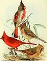 Bird lore (1913) (14768888793).jpg