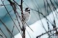 Bird perching on a branch in the snow (Unsplash).jpg