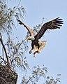 Birds (17845496415).jpg