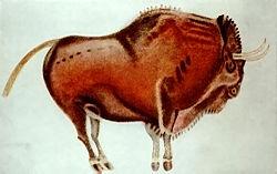 Bisonte de Altamira.jpg