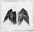 Bittern's Wings- study showing both sides MET 45139.jpg