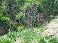 Blüßengraben Mündung andere Dränage.jpg