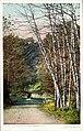Black Birches, Zoo Park (NBY 5540).jpg