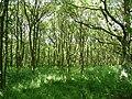 Black Carr woodland, Tong - geograph.org.uk - 1381528.jpg