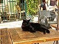 Black cat in Bute Montmartre-Paris-France.jpg