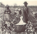 Black cotton farmers 1886.jpg