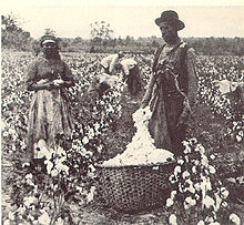 "cotton industry during the 1800s But the rise of the cotton and sugar crops and the spread of tobacco to new areas increased the dependence of the south on slave labor ten to 20 slaves worked every 100 acres of cotton, and they became valuable ""commodities"" in 1800, the average cost of a slave was about $50 by 1850, it was more than $1,000."