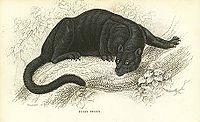 Black puma.jpg