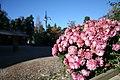 Blommor - panoramio.jpg