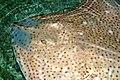 Blue Reef Aquarium 9 March 2005 Cornwall d (278546174).jpg