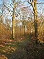 Blunts Wood - geograph.org.uk - 1099896.jpg