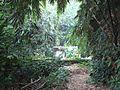 Bogor Botanical Gardens Java27.jpg