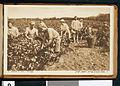 Booklet of postcards Societe Cooperative Vigneronne des Grandes Caves Richon-le-Zion et Zicron-Jacob, Palestine, ca.1900 (CHS-47571~15).jpg