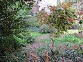 Borgo pinti 55, palazzina, giardino 07.JPG