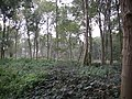 Borley wood - restoration - geograph.org.uk - 263125.jpg