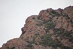 File:Bortigiadas, Viddalba - Monte Ruiu (06).JPG