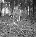 Bosbewerking, arbeiders, boomstammen, gereedschappen, Bestanddeelnr 251-9144.jpg
