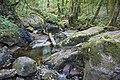 Bosque - Bertamirans - Rio Sar - 036.jpg
