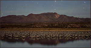 Bosque del Apache at night.jpg