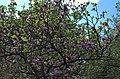 BotGardenFomin DSC 0269-1.jpg