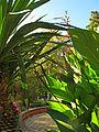 Botanička bašta Jevremovac, Beograd - jesenje boje, svetlost i senke 17.jpg