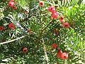 Botanični vrt (3990157809).jpg
