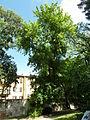 BotanicGardensPisa (81).JPG