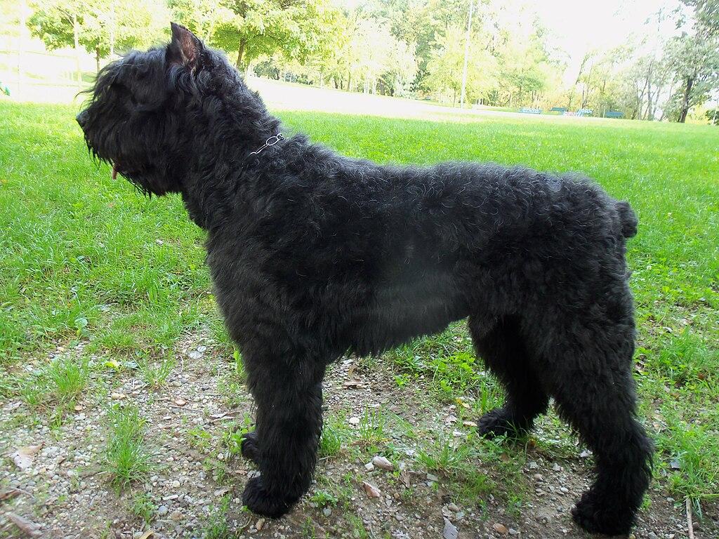 K Dog Training Norfolk