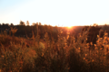BrachterWald bei Sonnenaufgang07.png