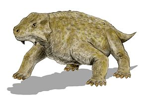 Karoo - Bradysaurus