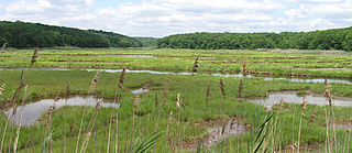 Riparian forest forested or wooded area of land adjacent to a body of water