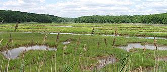 Riparian forest - Atlantic coastal salt marsh