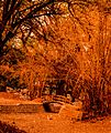 Bridge in the woods (8656062532).jpg