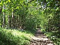 Bridleway, Castle Hill Woods - geograph.org.uk - 421122.jpg