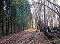 Bridleway through Badlesmere Park Wood - geograph.org.uk - 1051240.jpg