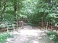Bridleway through the Trees - geograph.org.uk - 189673.jpg