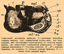 Brockhaus and Efron Encyclopedic Dictionary b75 158-0.jpg