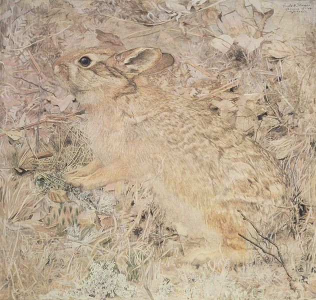 File:Brooklyn Museum - The Cotton-Tail Rabbit among Dry Grasses and Leaves - Gerald H. Thayer - overall.jpg
