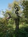 Budai Arborétum. Felső kert. Fehér eperfa (Morus alba). - Budapest XI. kerület.JPG