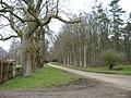 Bullpark Wood - geograph.org.uk - 326768.jpg